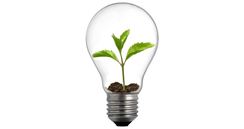 Sprout_Lightbulb2_850