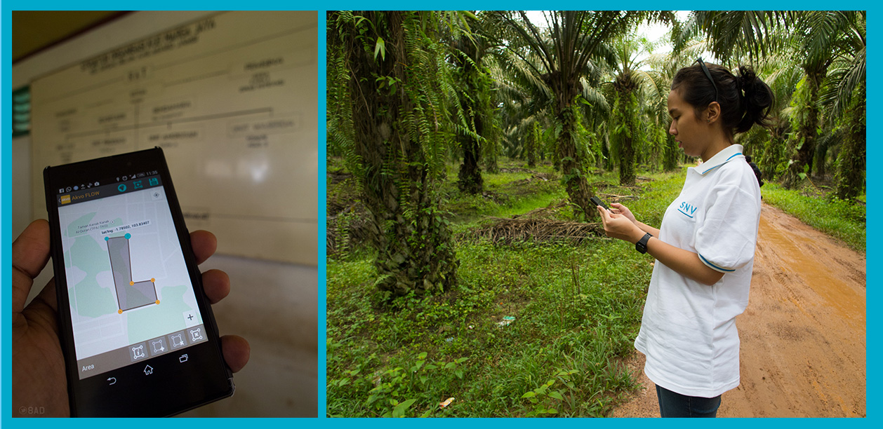 An enumerator is using the Akvo FLOW in the middle of palm oil plantation. The task is to draw a closed polygon of every field, and tag the identity for its owner, with this scheme, reporting and tracing is more manageable.